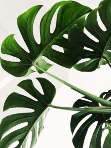 Planter er godt for krop og sjæl